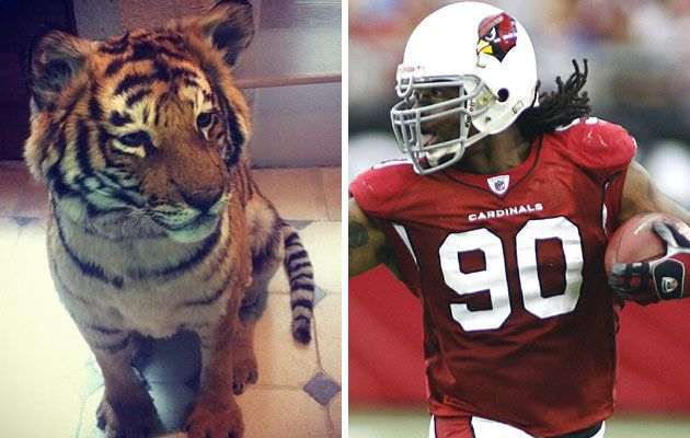 PETA condemns NFL star for buying pet baby tiger