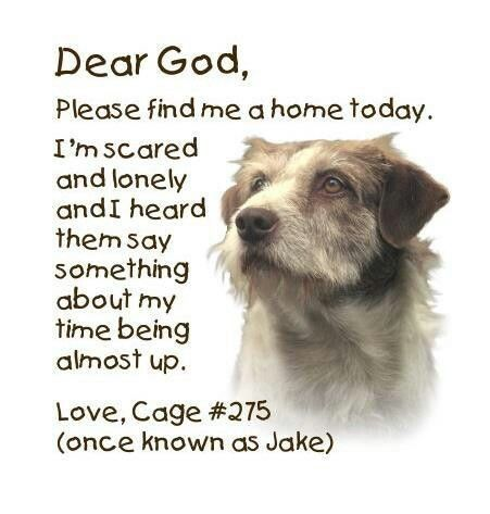 Pin by Hailey Marie Soto on Animals Dogs, Animal shelter