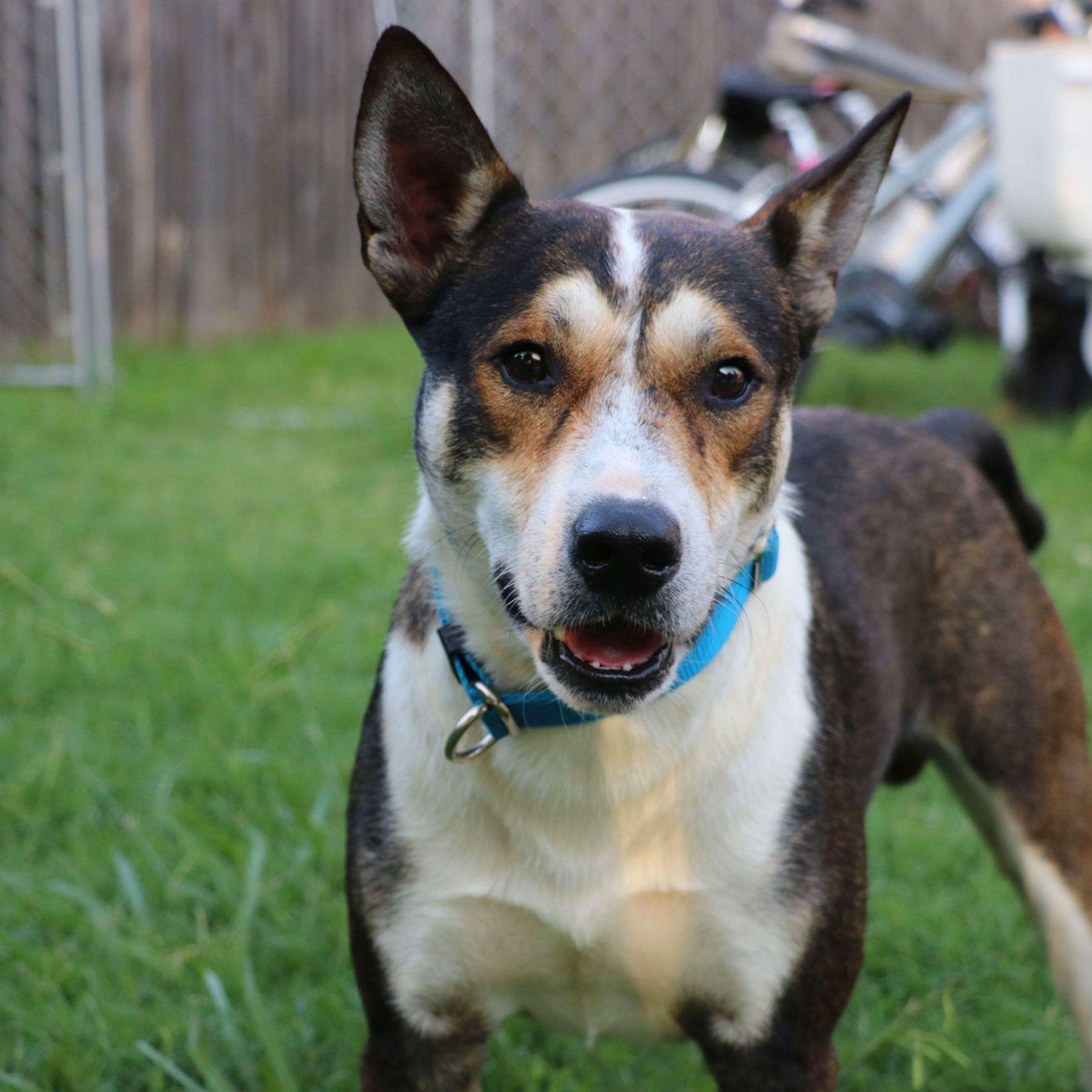 Dog survives botched euthanasia wakes up abandoned and