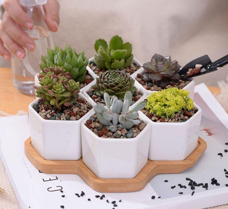 Céramique succulente Cactus plante fleur Bonsai pots Conteneur Jardiniere Jardin Décoration