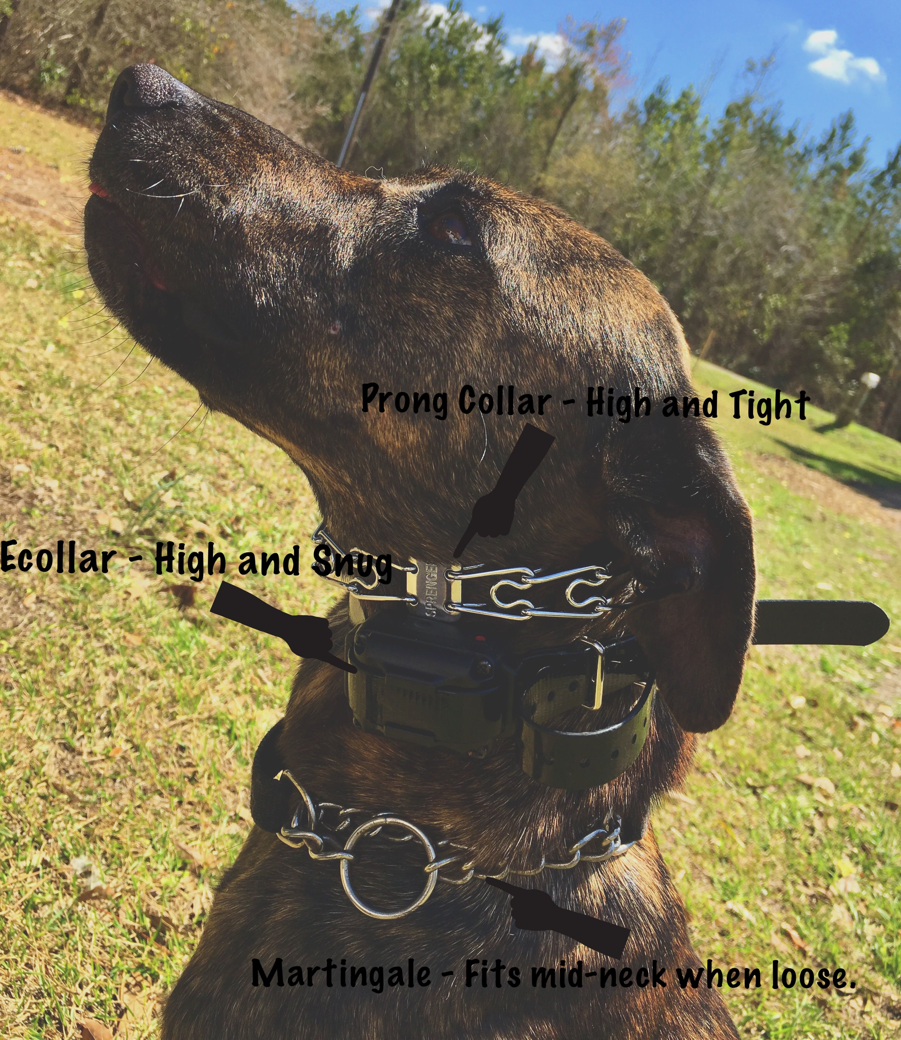 Animalalliesllc Training Tools Pet Care Dog Training
