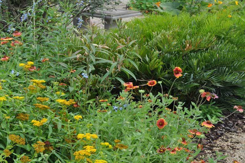 Our Gardens - Mounts Botanical Garden   Butterfly garden ...