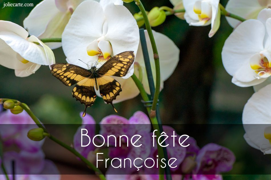 Francoise Prenom Image Bonne Journee Image Bonne Fete Bonne Journee Humour