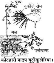 Pin on RBSE Solutions for Class 11 Biology