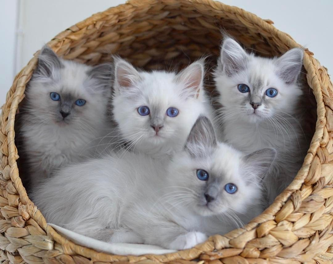 Crazy Lady Cat Starter Kit Kittens Cutest Baby Cats Cute Animals