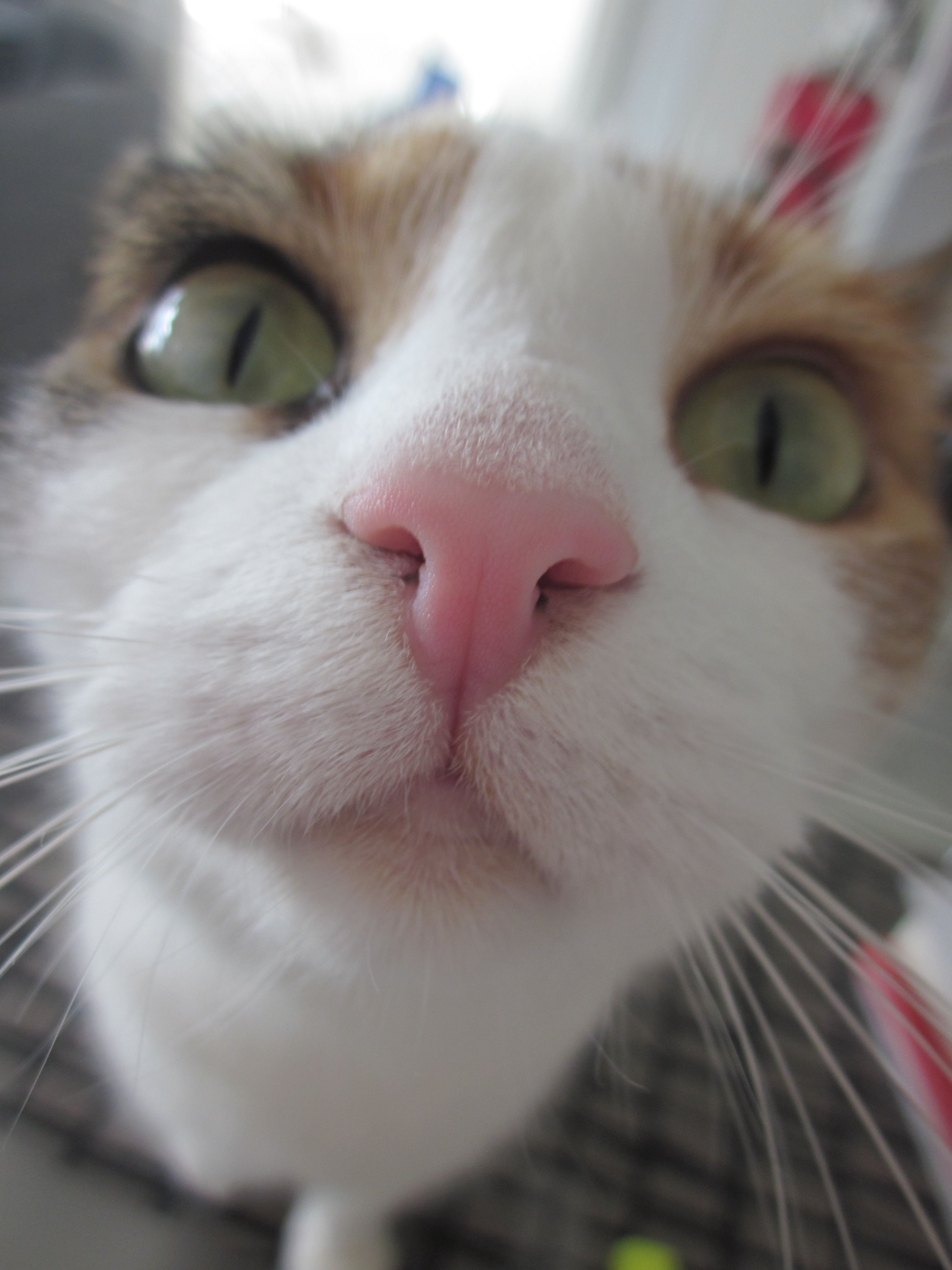 Waking up to the touch of this pink nose, can only start a good day.