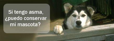 Si tengo #asma, ¿puedo conservar mi #mascota?