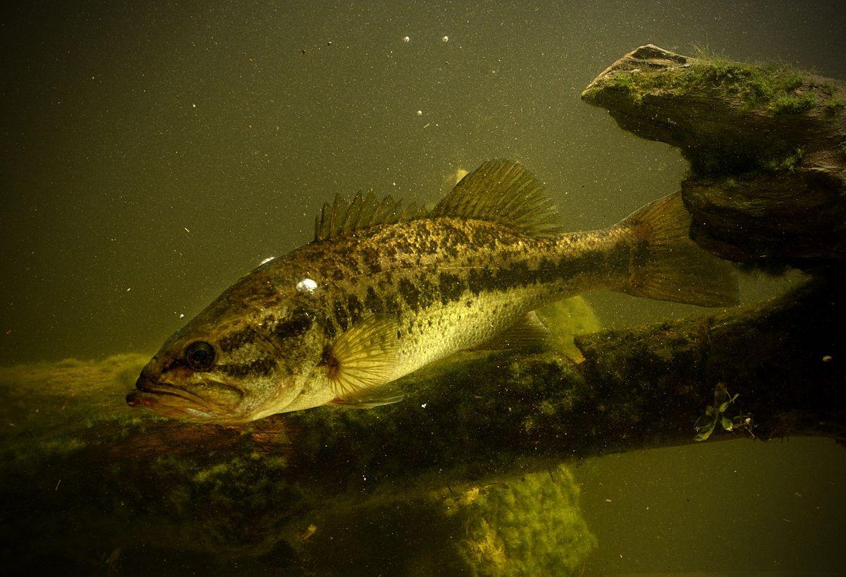 Fish aquatarium 1000 islands ontario bass fishing