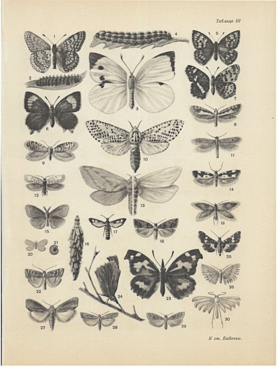 Vintage insects print butterflies art poster black and white original russian authentic print illustration poster for