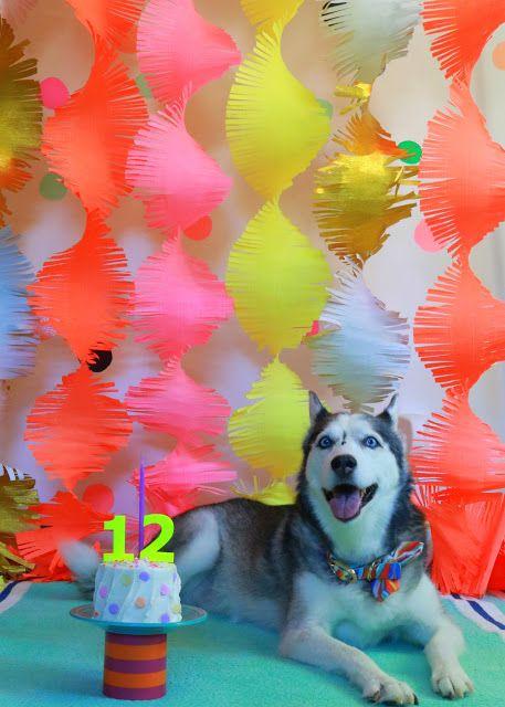 Puppy Dog Birthday Party Cake Smash Photo Shoot