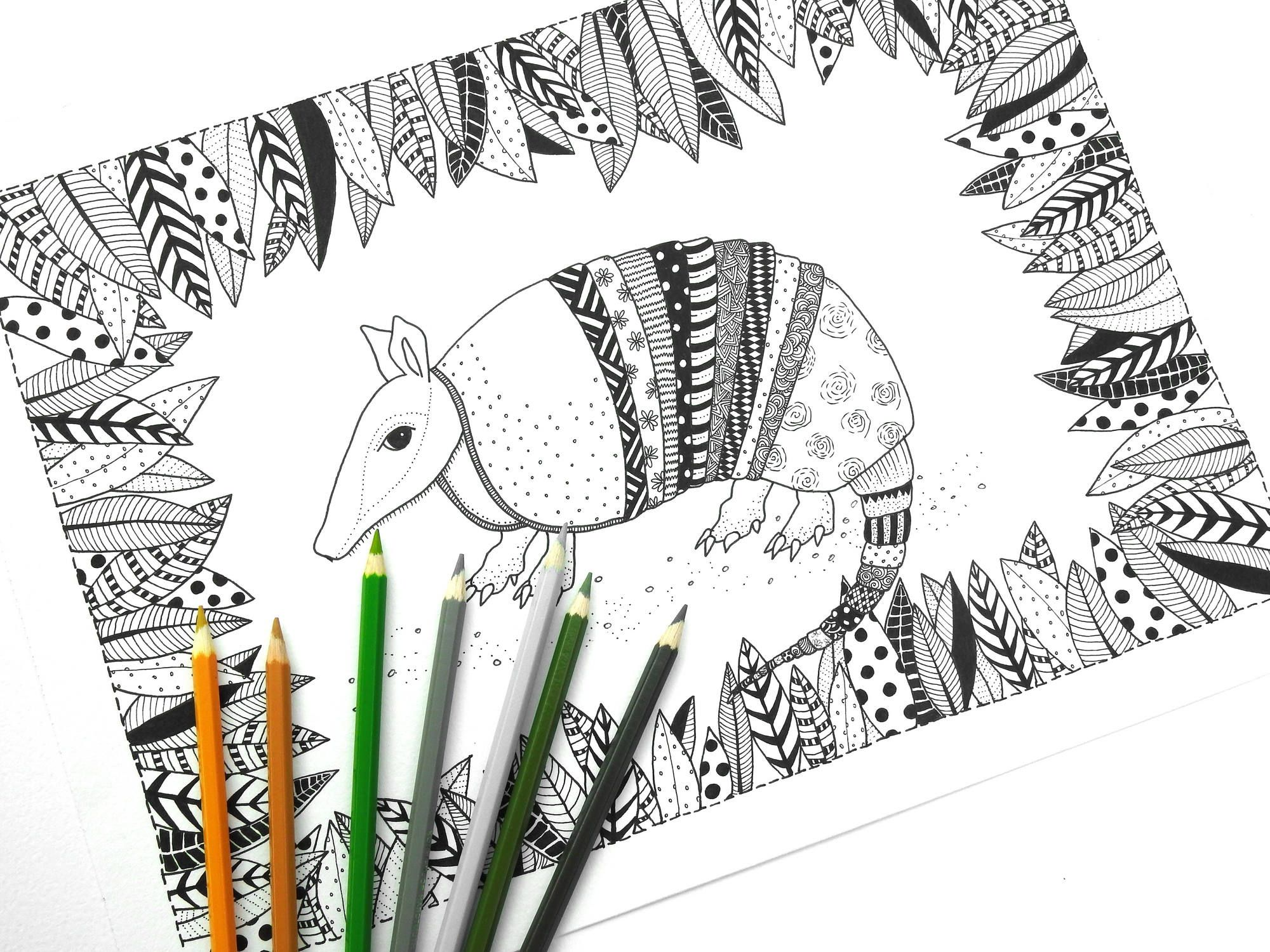 Armadillo Colouring Page Adult Colouring Page Adult Coloring