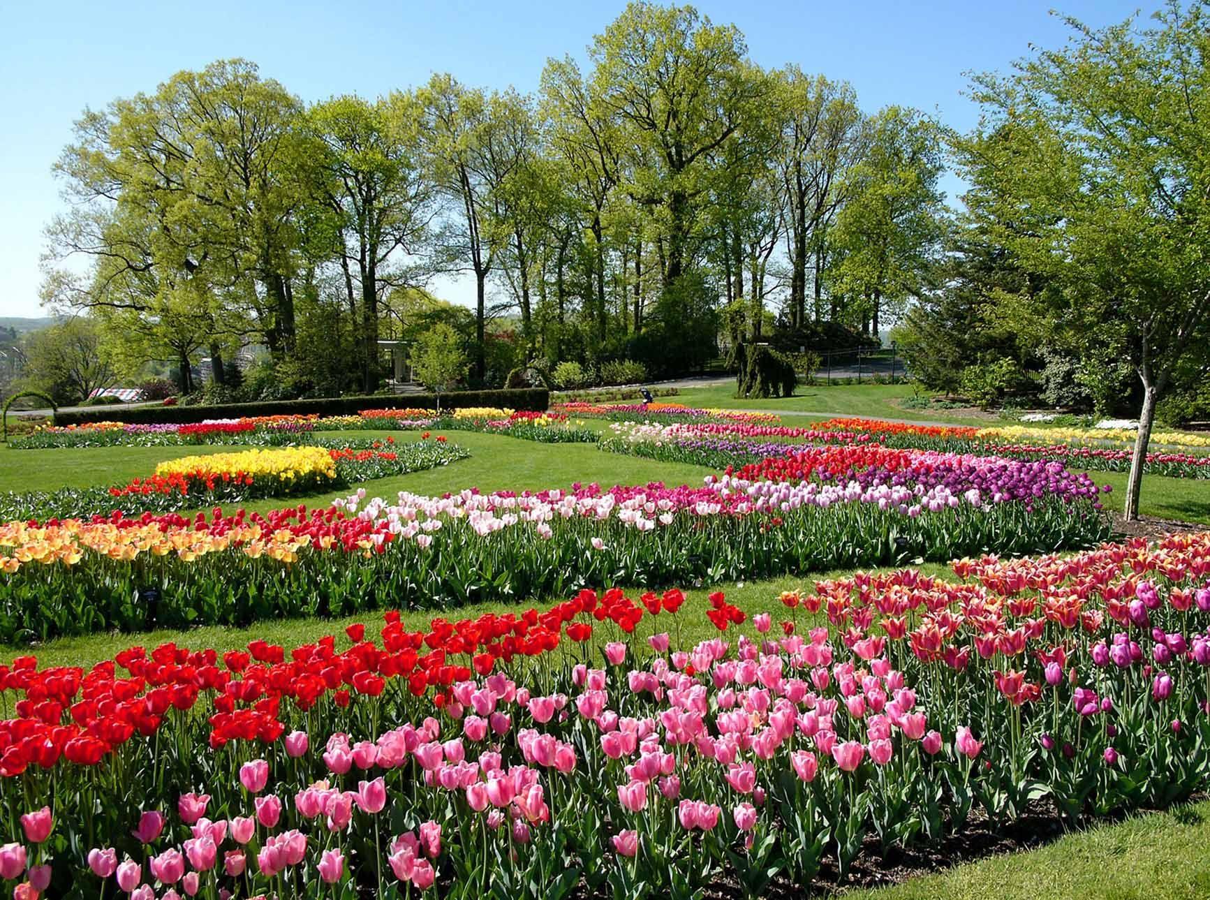 Populares Wallpaper de flores coloridas no jardim   Jardins e campos de  OV18