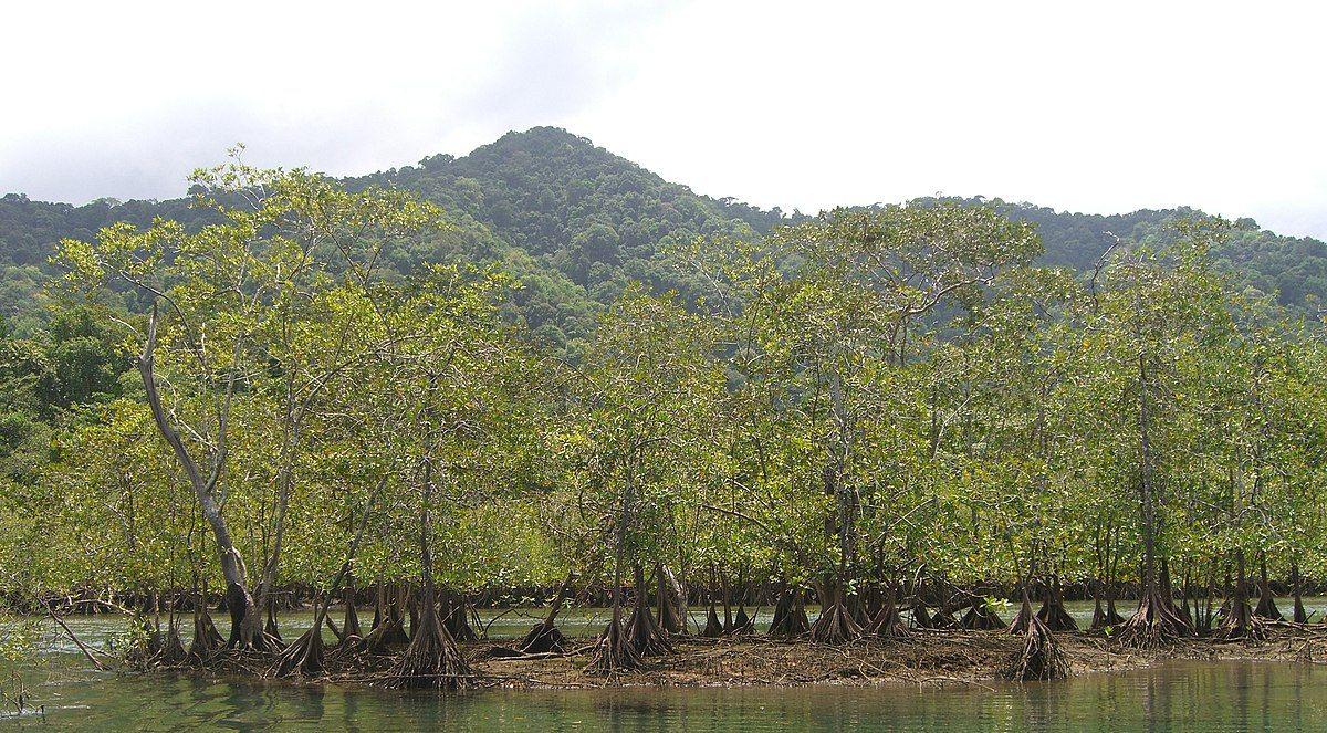 Parque Nacional Natural Ensenada De Utría Wikipedia La Enciclopedia Libre Parques Nacionales Parques Ensenada
