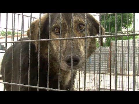 Rumanische Strassenhunde Haben Ein Recht Zu Leben Hunde Tiere Tierschutzorganisation