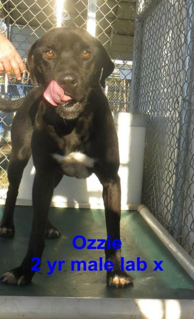 Adopt Ozzie On Petfinder Animals Adoption Animal Shelter