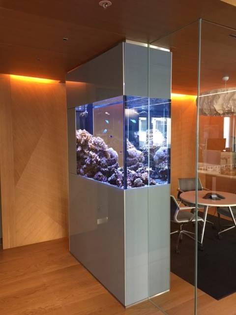 meerwasser aquarium als raumteiler in groraumbro