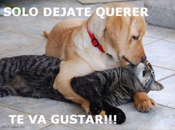 Pin De Armando De La Paz En Meme Animales Perros Y Gatos Graciosos Perros Enamorados Perros