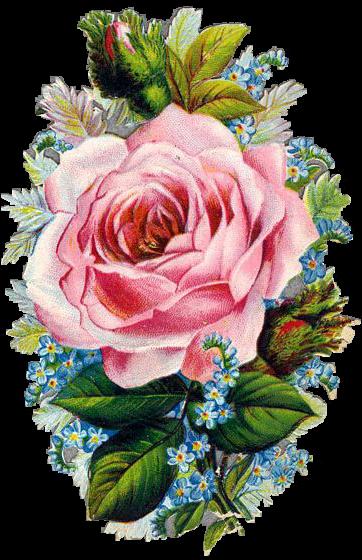 1x Poesiebilder Oblaten Rosen roses viele 411 Glanzbilder Blumen Vergissmeinnic