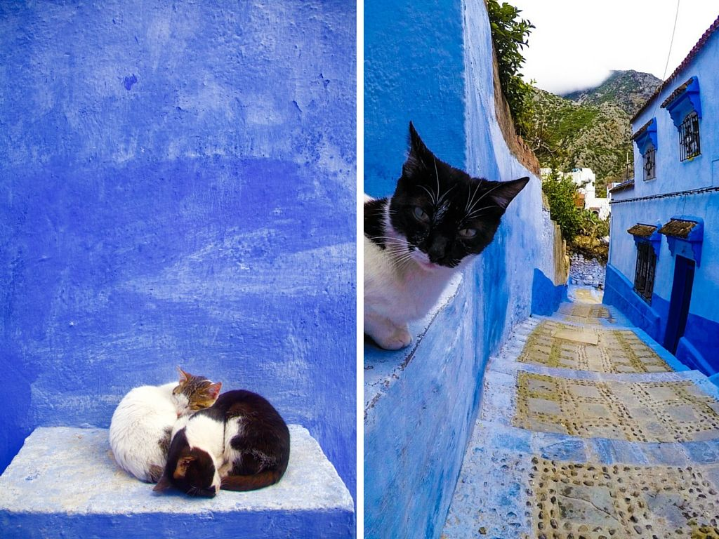Cats of Chefchaouen