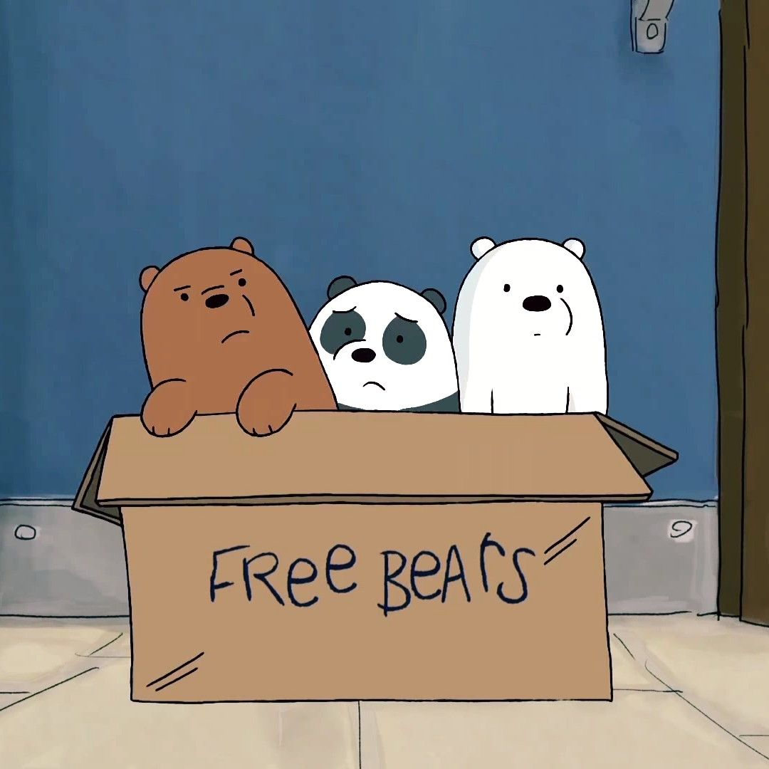 Free bears images 78