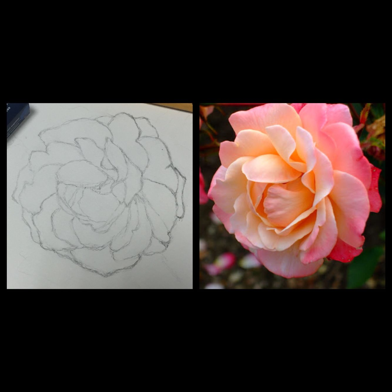 Drew an english rose that will be my #watercolor project this weekend