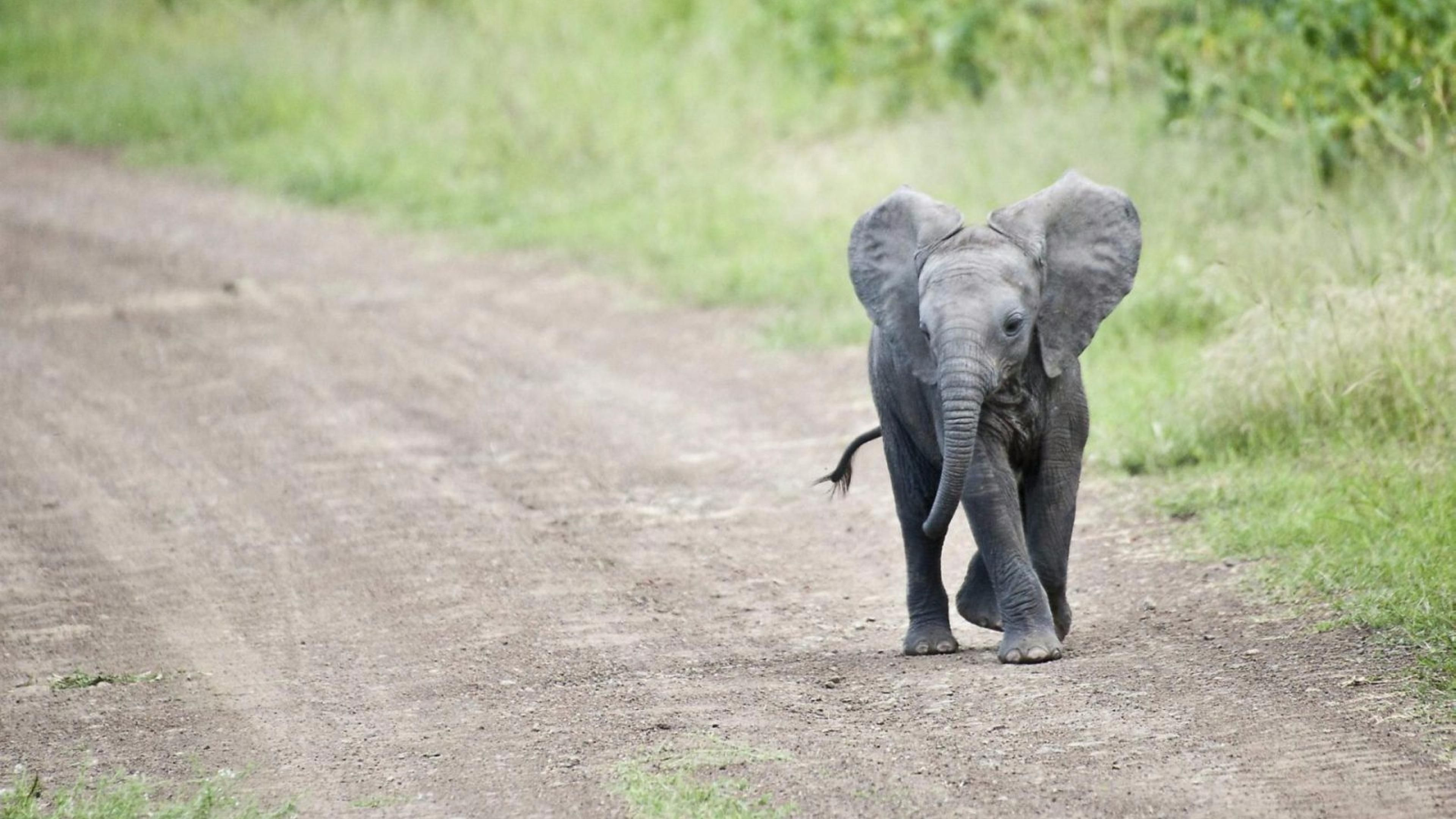 Cute Elephant Wallpaper Free Cute Baby Elephant Baby Elephant Pictures Baby Animals