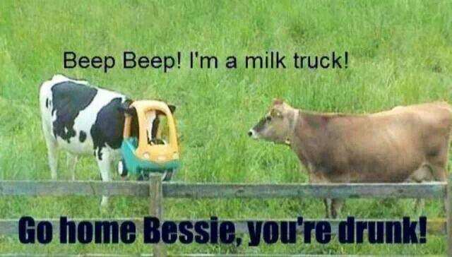 Go home, Bessie