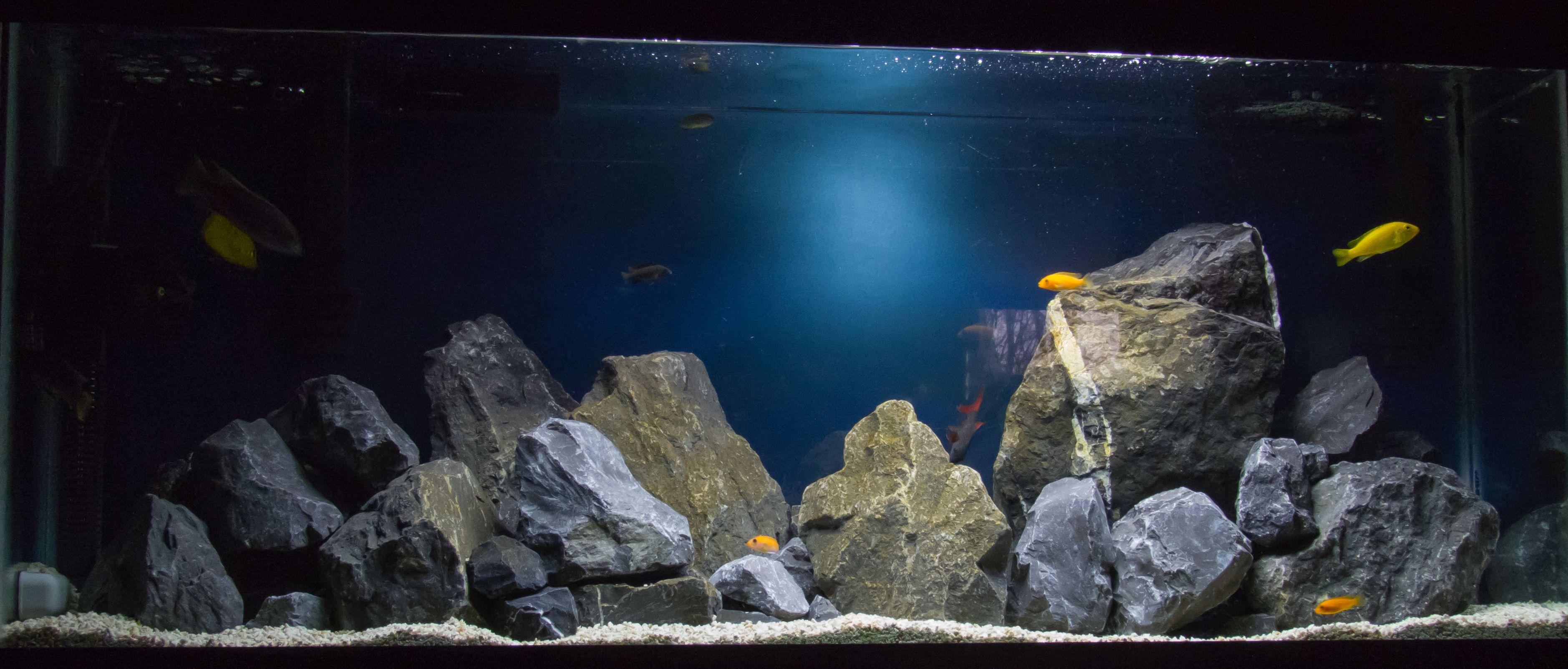 Cichlid Aquarium with 4W flourescent backlight