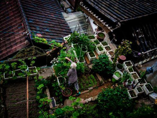 Best Urban Gardening Book quite Urban Gardening ...