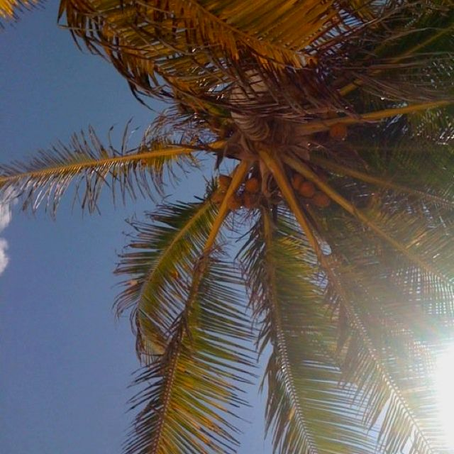Relaxing under a beach Palm /// Relajada bajo un palmera
