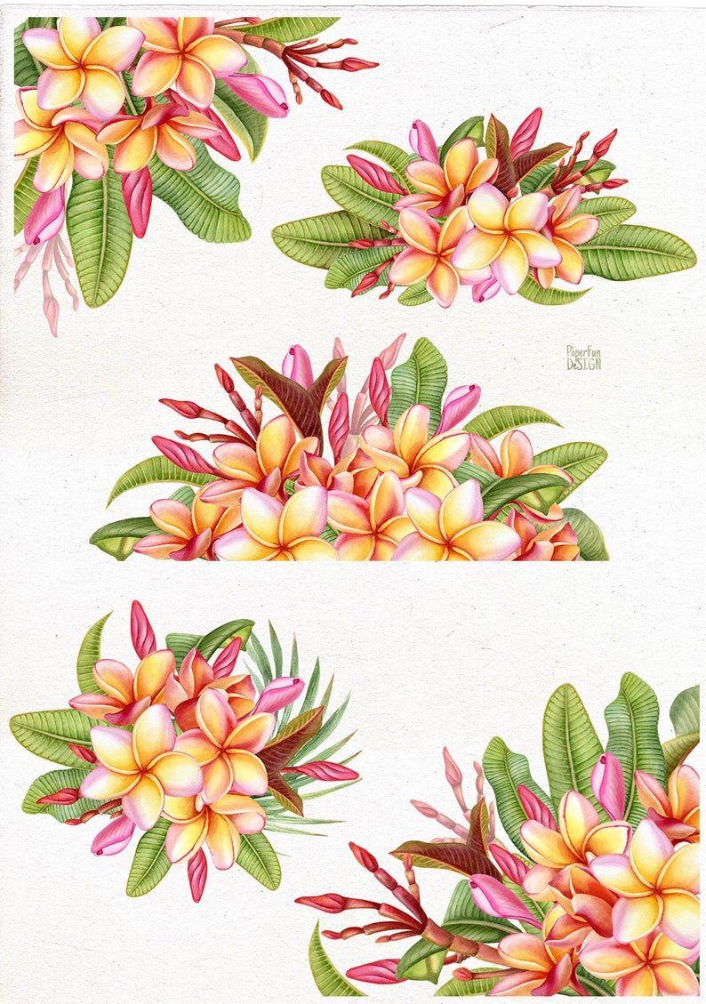 Plumeria Clipart : plumeria, clipart, Watercolor, Plumeria, Bouquets., Resolution, Tropical, Digital, Bouquet,, Flower, Painting,