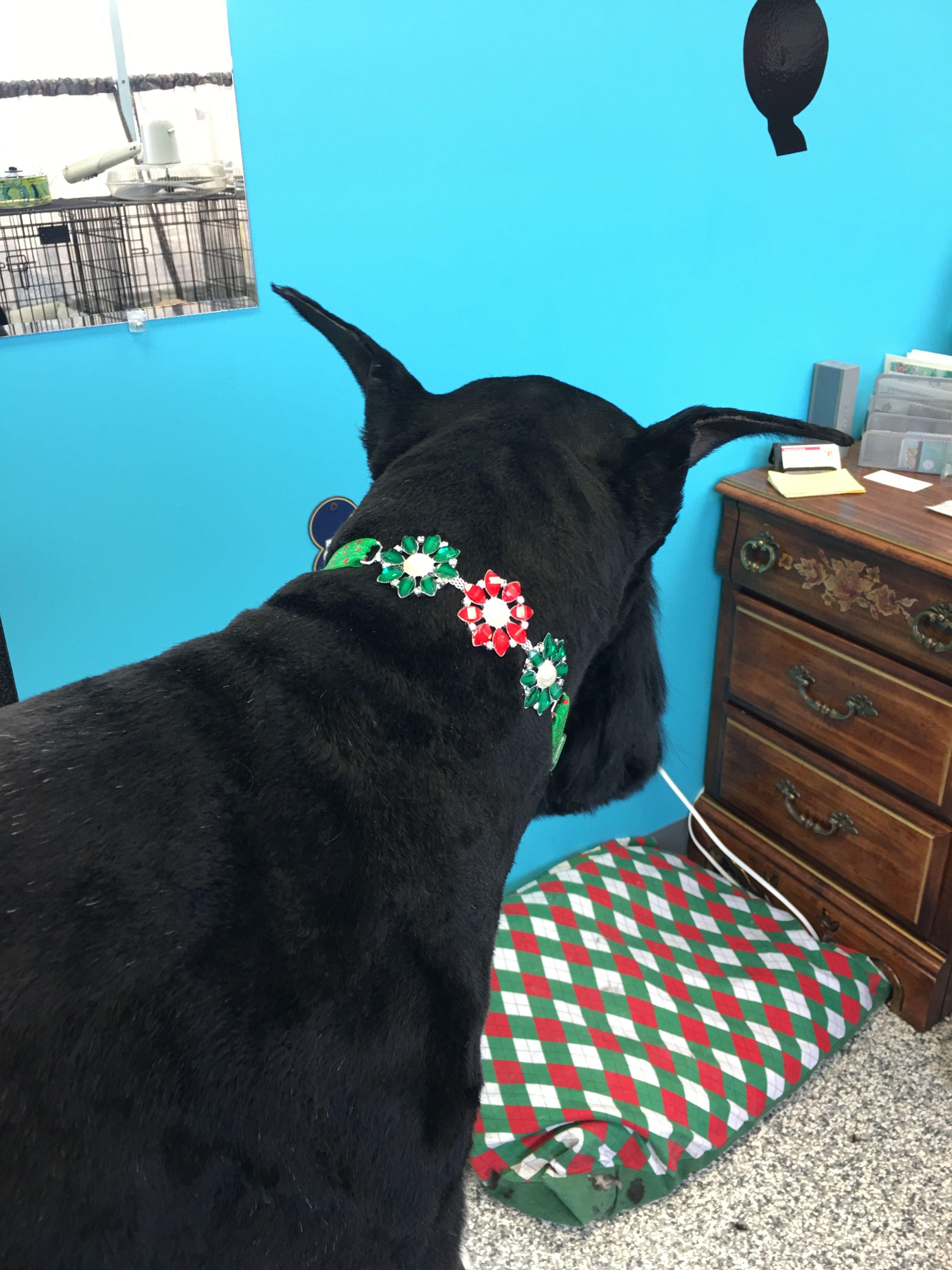 Pampered Pets Salon Pamper Pets Pet Salon Pets