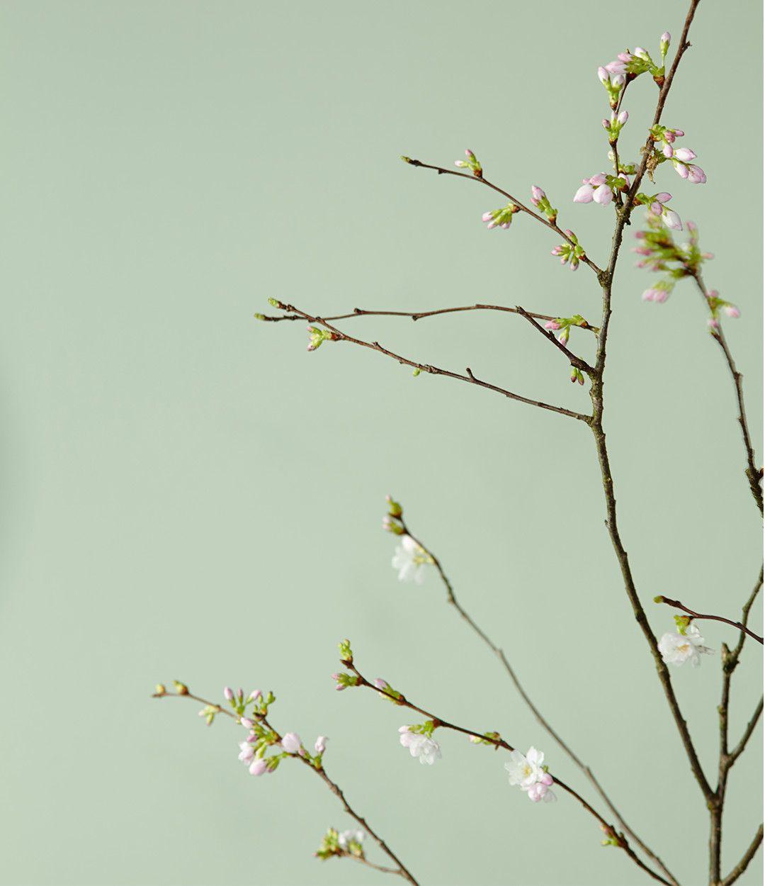 Die Farbe Grün Lässt Räume Aufblühen: Wohnzimmer, Badezimmer Oder Küchen  Wirken Mit Grün Nuancen In Der Raumgestaltung Erfrischend Ausgleichend.