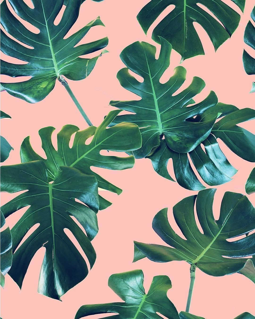 Our fave blush and palm leaves print Palm leaf wallpaper