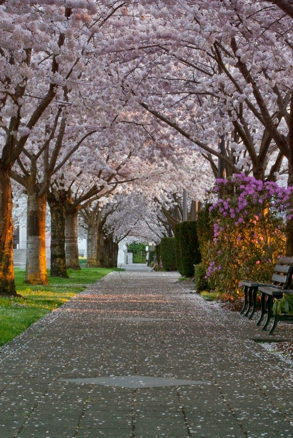 Pin By Rick Yeager On See The World Oregon Travel Pink Blossom Tree Portland Travel