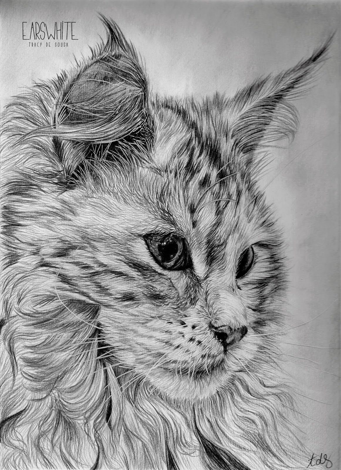 Dessin au crayon noir format a4 art artist draw dessin chat cat realist - Dessins de chats ...