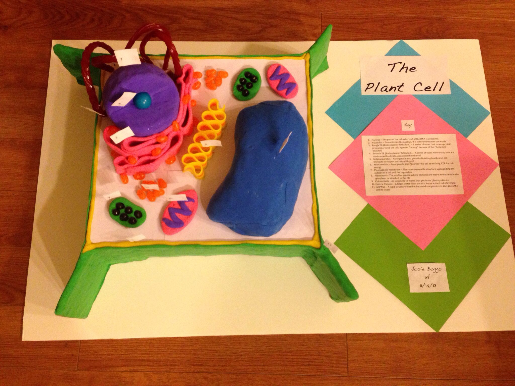 Plant Cell Science Projects And On Pinterest Diagram 3d Model Project 10th Grade