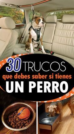30 Tricks that every dog owner should know They will make your life easier  Pets Pets Pets Welcome to our website We hope you are satisfied with the content we offer If t...