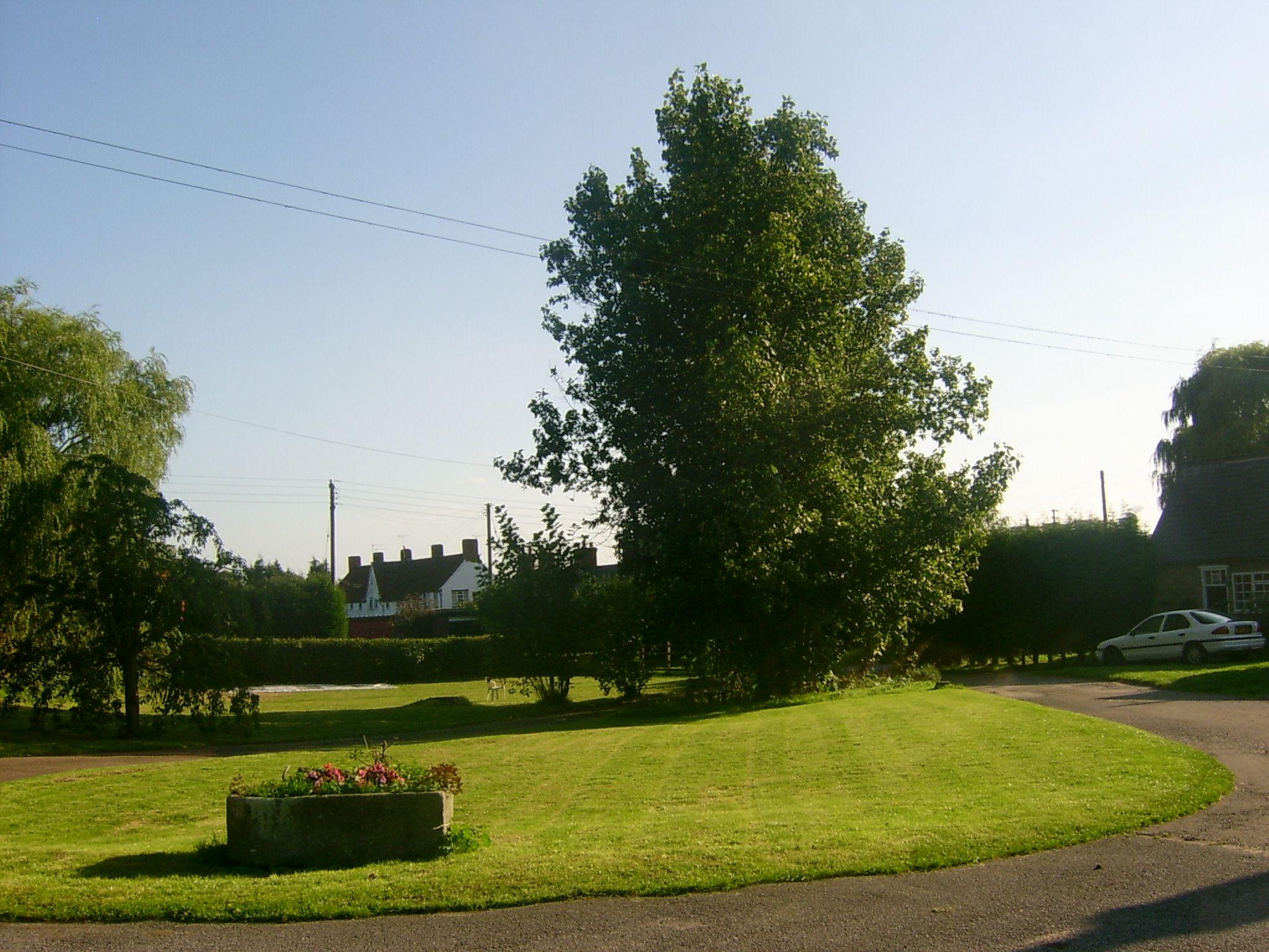 Freshly cut lawn...