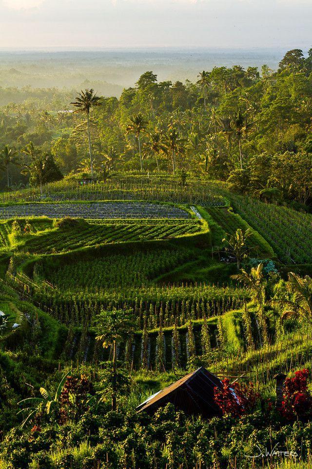 Village Above the Clouds, Desa Atas Awan, Bedugul, Bali, Indonesia #balipins