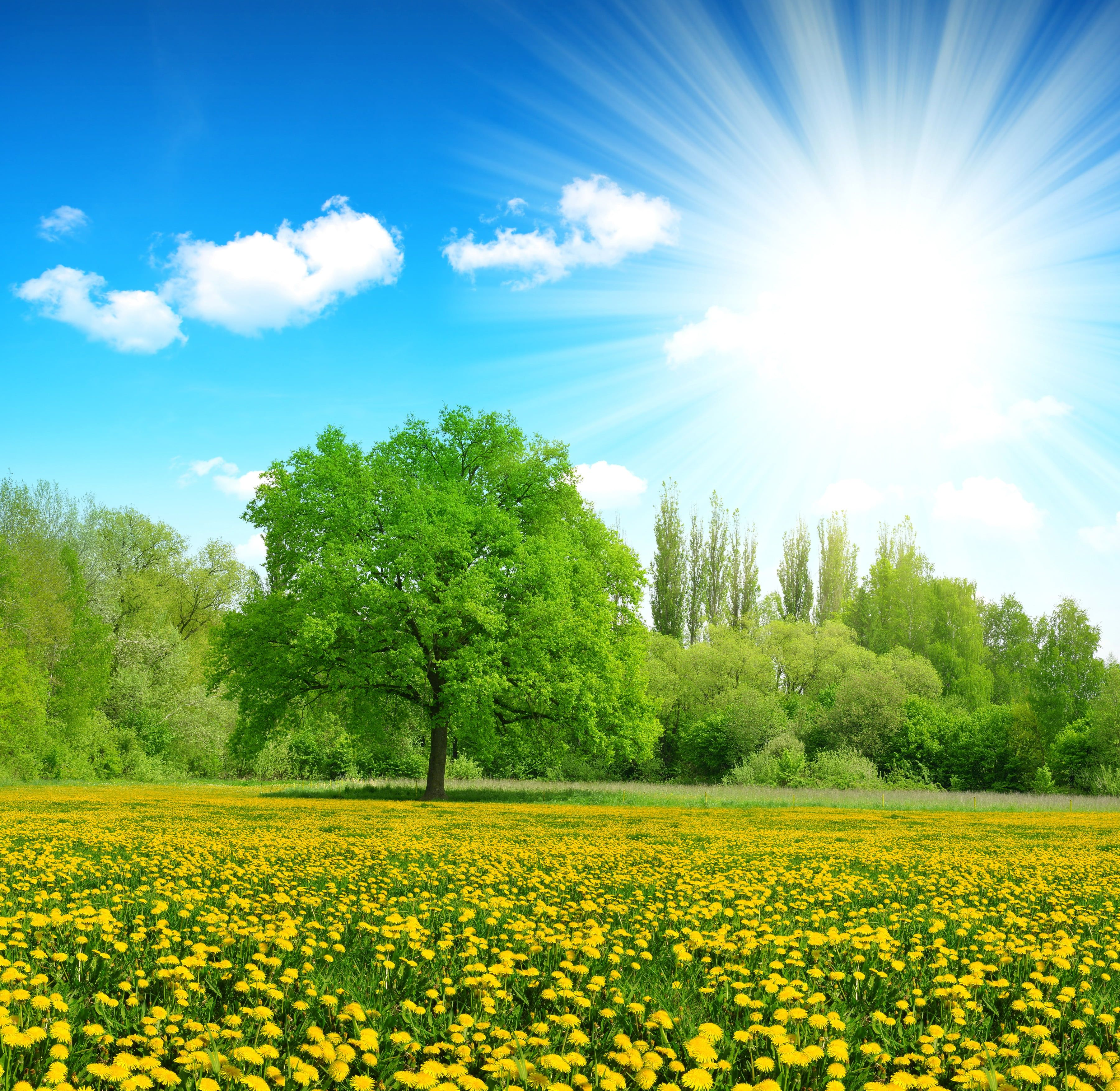 Green Tree Greens Summer The Sky The Sun Clouds Rays Trees Flowers Glade Yellow Beautiful Nature Pictures Beautiful Nature Beautiful Nature Wallpaper Beautiful landscape tree plants sun rays
