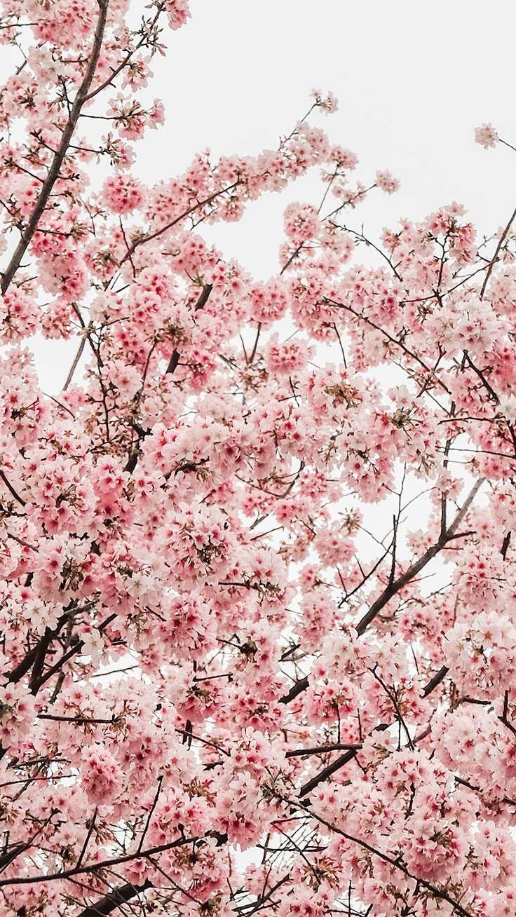 Photo of 12 Pretty Springtime iPhone bakgrunnsbilder   Preppy bakgrunnsbilder