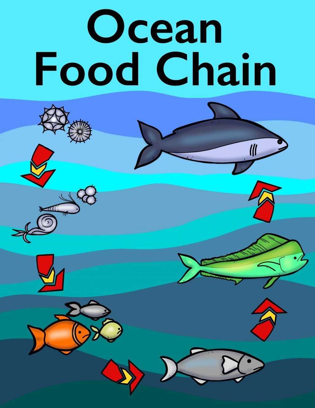 Ocean Food Chain Colouring Book