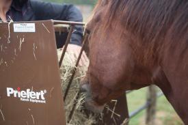 Hay & Grain Feeder
