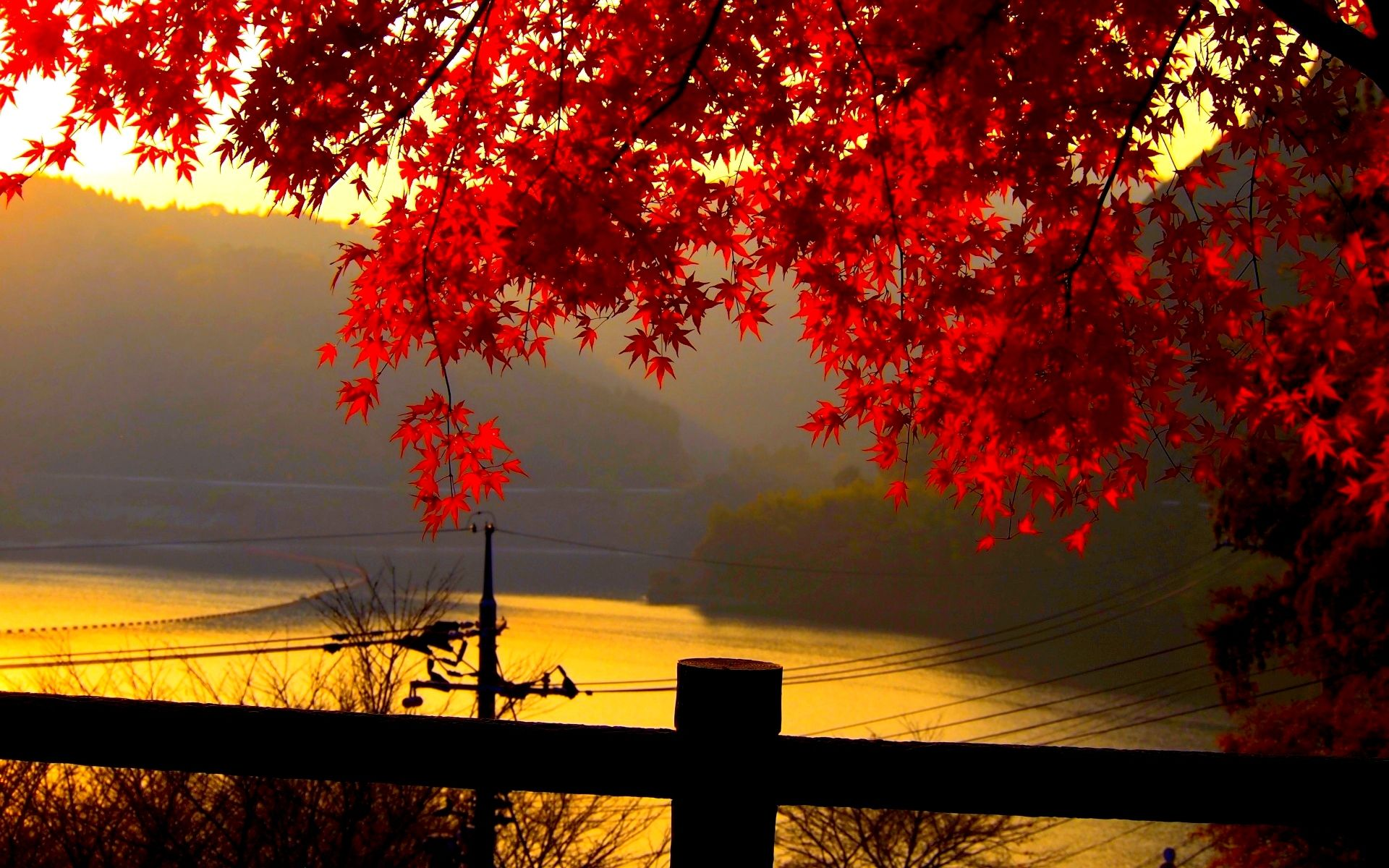 Red Autumn Leaves At Dusk Wallpaper Free Autumn Leaves Wallpaper Autumn Landscape Landscape Wallpaper