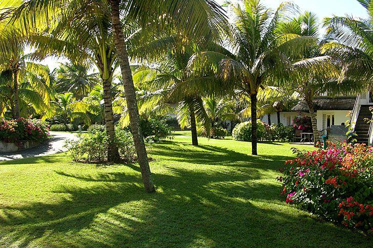 jardines con palmeras mis preferidos jardines
