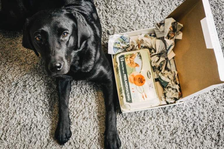 Spielzeug Fur Den Hund Mit Diesem Diy In Sekunden Selbst Gemacht Flummi S Diary Hundespielzeug Spielzeug Hund Spielzeug