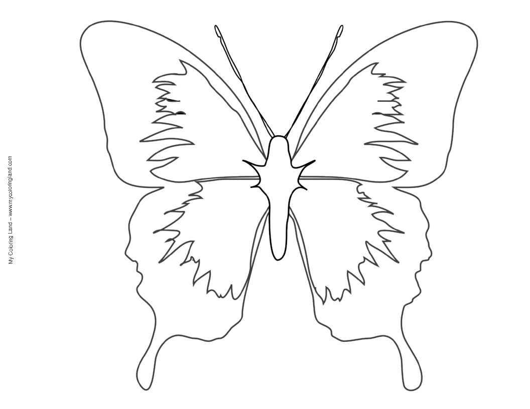 Butterfly coloring page symmetry - Butterfly Outline Coloring Page Animal Coloring Full Page Butterfly Template Swallowtail Butterfly To Color Swallowtail Butterfly To Color