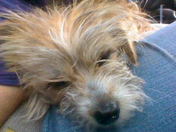 Http Oklahomacity Craigslist Org Laf 3818284834 Html Losing A Pet Pets