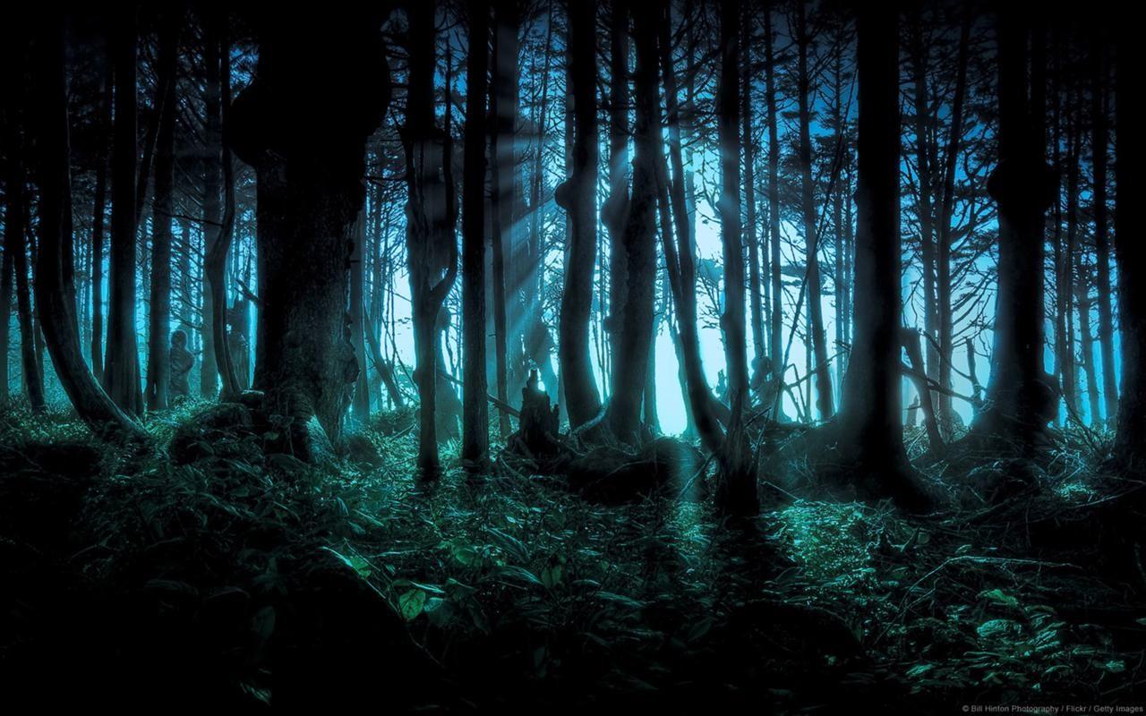 1280px-Eerie_Forest_Windows_Background.jpg (1280×800)